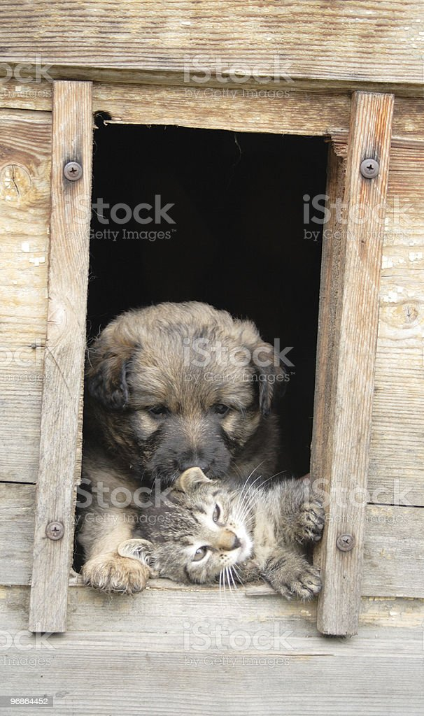 cat and dog at home stock photo