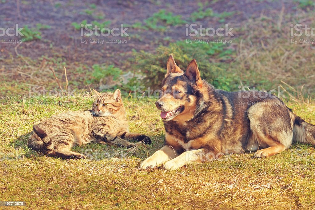 Cat and dog have a rest stock photo