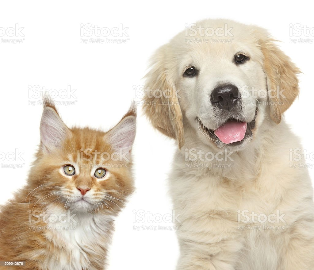 cat and dog in front of white background stock photo
