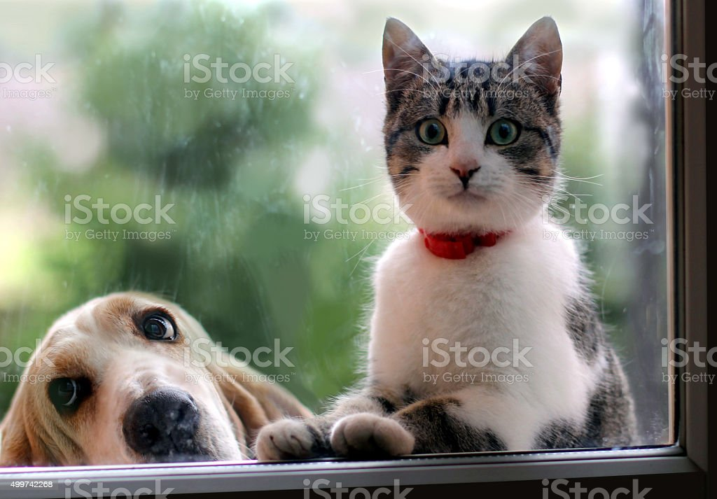 Cat and dog looking through the window stock photo