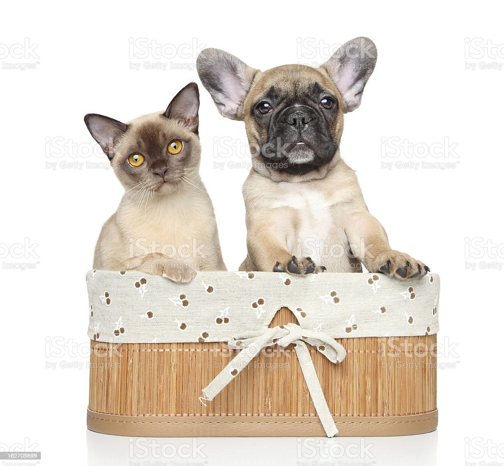 Cat and dog on a white background royalty-free stock photo