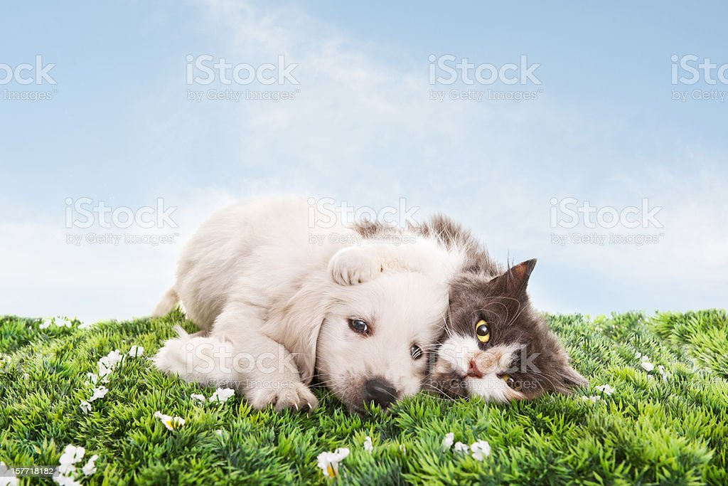 Cat and dog on grass stock photo