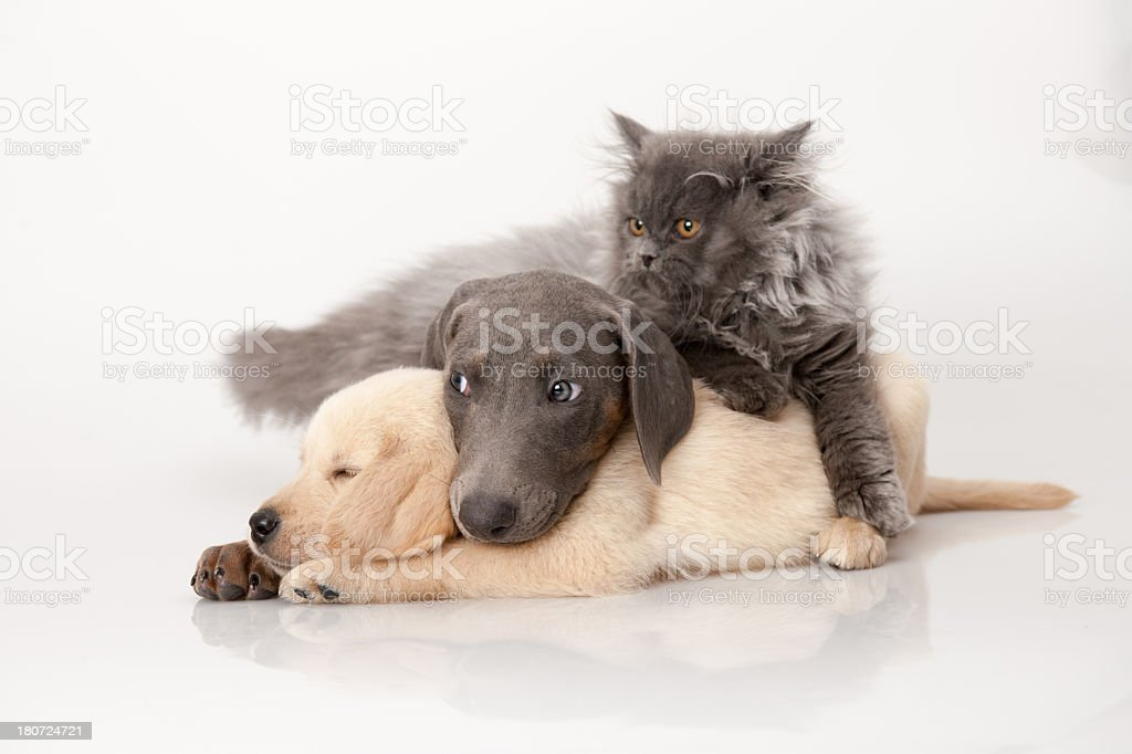 cat and dog royalty-free stock photo