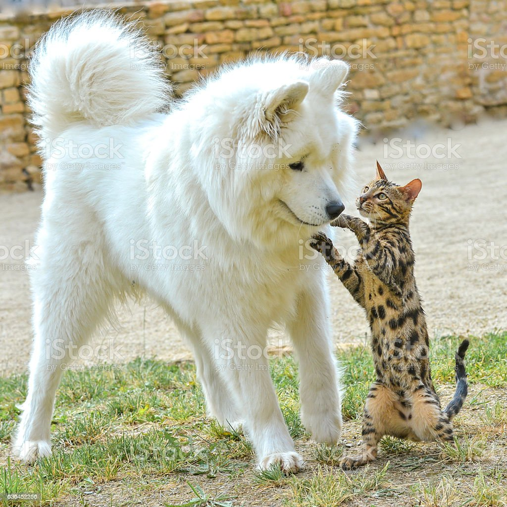 Cat and dog playing stock photo