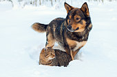 Cat and dog playing together on the snow in winter