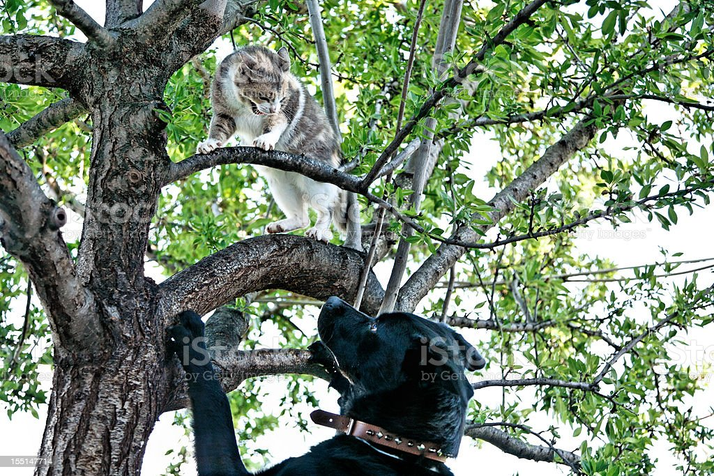 Cat and dog quarrel stock photo