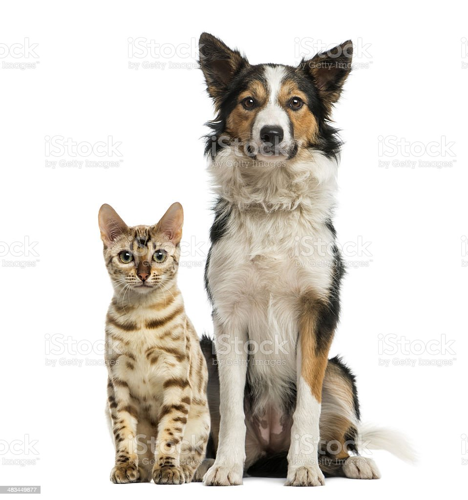 Cat and dog sitting together, facing at the camera stock photo