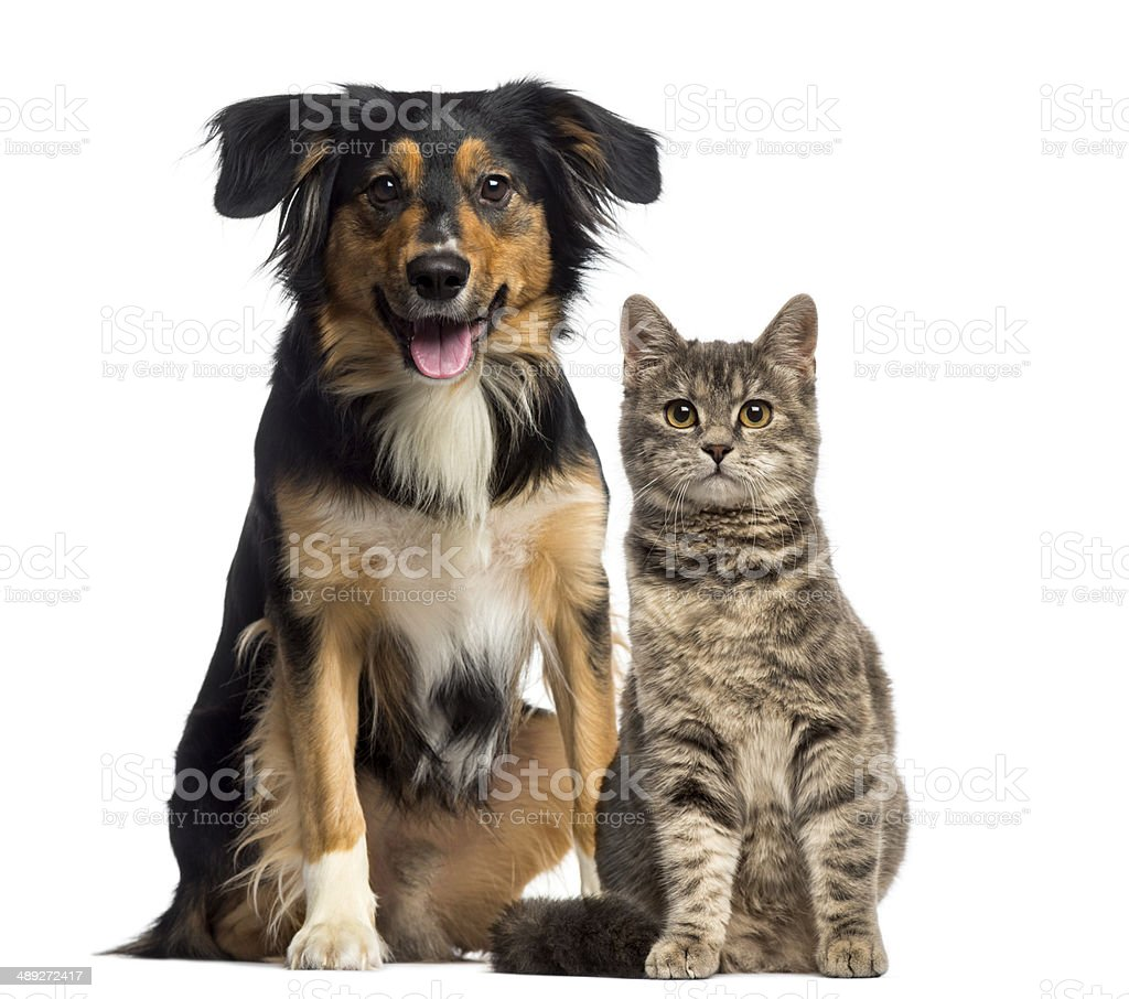 Cat and dog sitting together stock photo