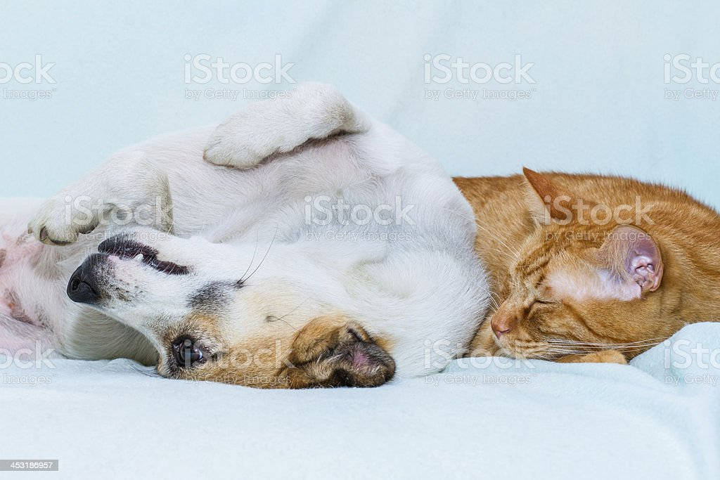 cat and dog sleeping on the sofa stock photo