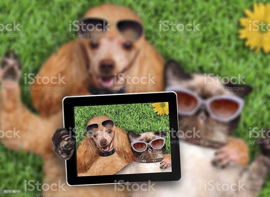 Cat and dog taking a selfie. stock photo