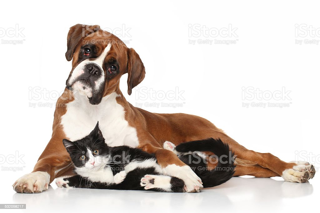 Cat and dog together lying on the floor stock photo