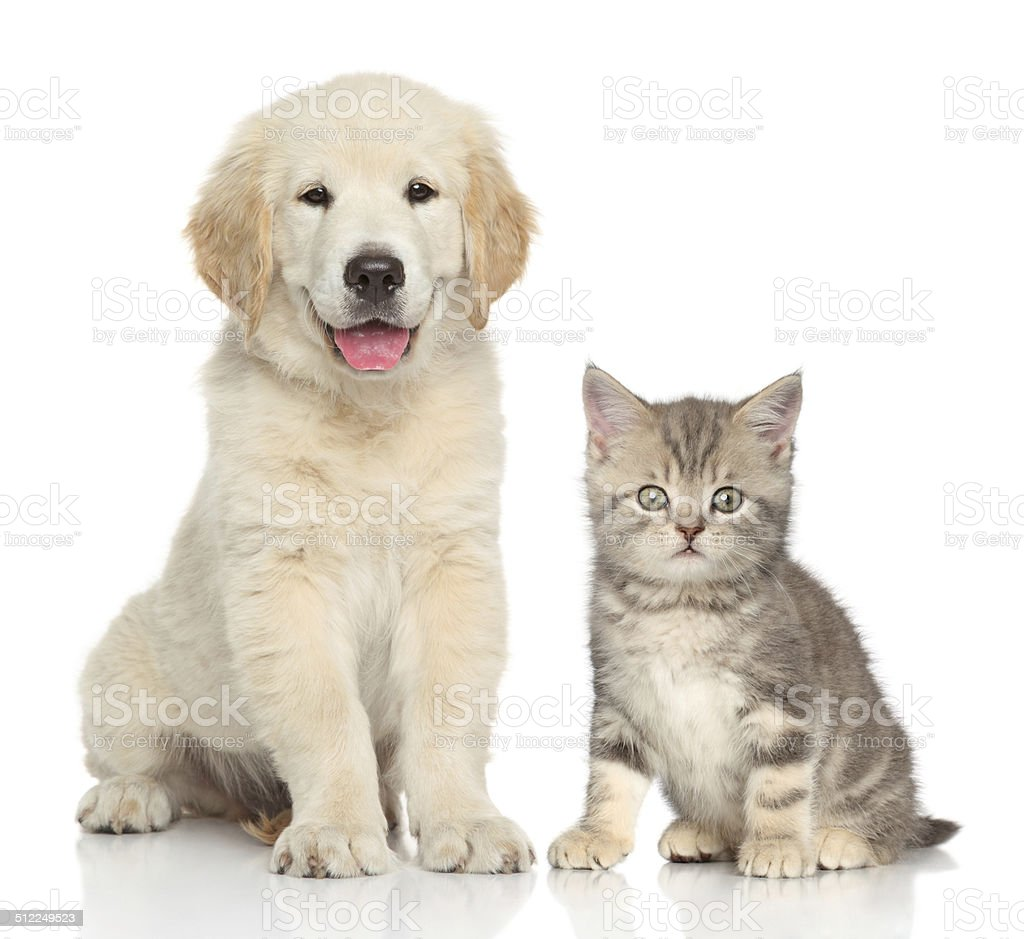 Cat and dog together stock photo
