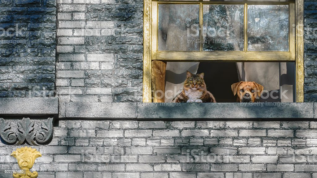Cat and Dog watching from the window stock photo