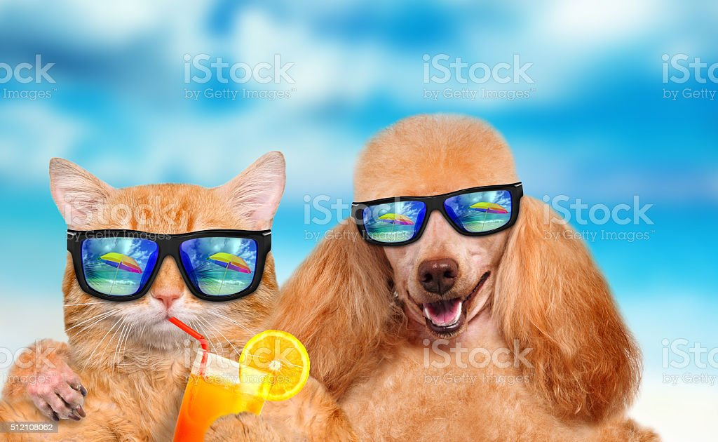 Cat and dog wearing sunglasses relaxing in the sea background. stock photo