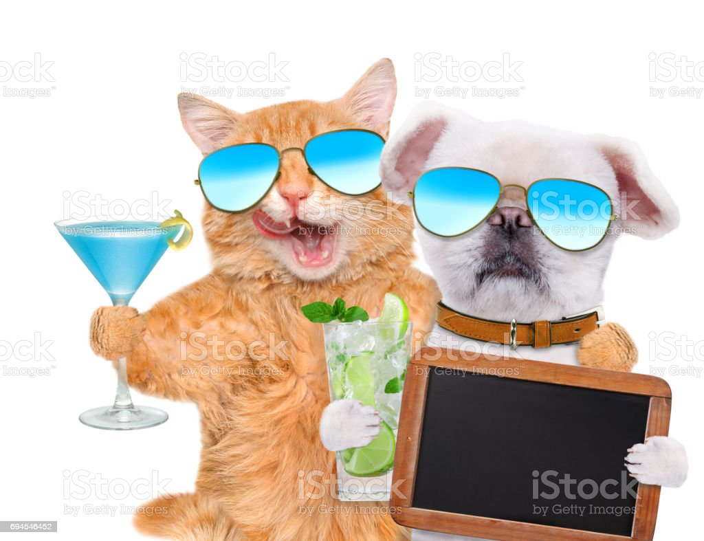 Cat and dog wearing sunglasses relaxing in the white background. stock photo