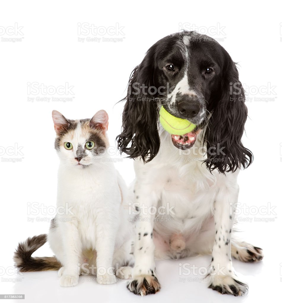 cat and dog with ball looking at camera. stock photo