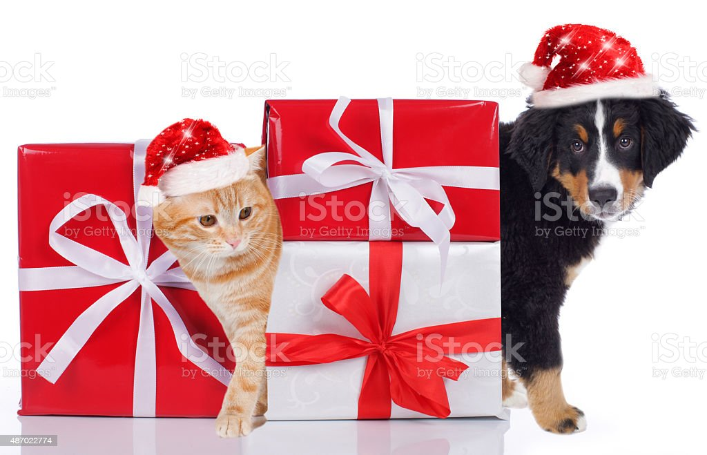 Cat and dog with christmas gift stock photo