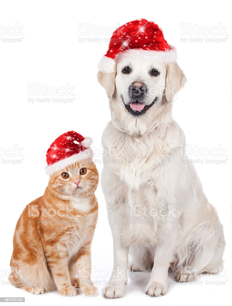 Cat and dog with santa hat stock photo