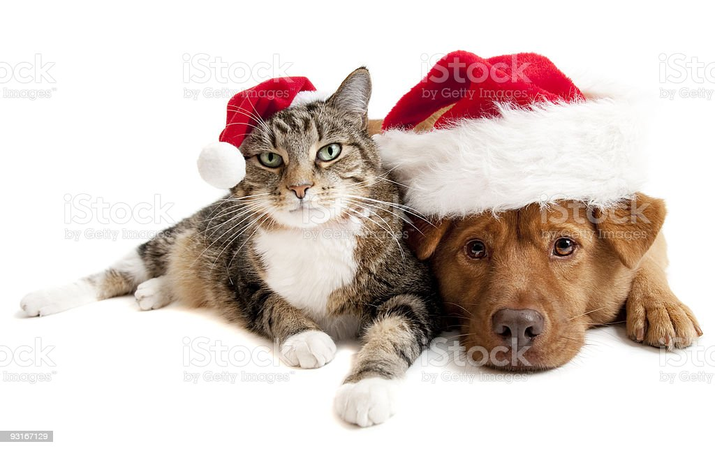 Cat and Dog with Santas Claus hats stock photo