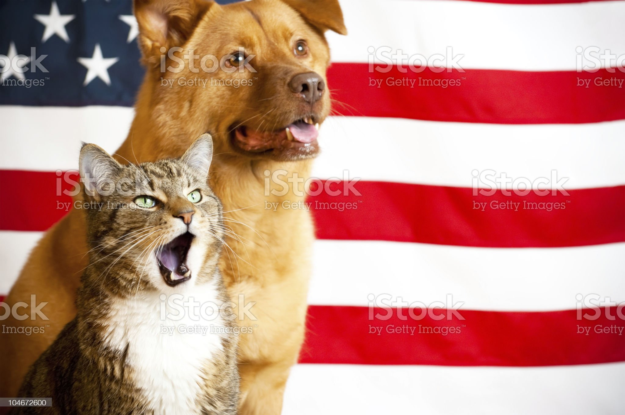 cat and dog with US flag royalty-free stock photo