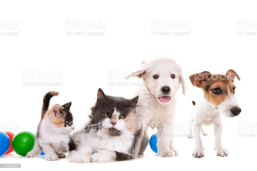 cat and dogs stock photo