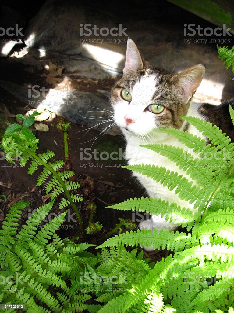 Cat and fern stock photo