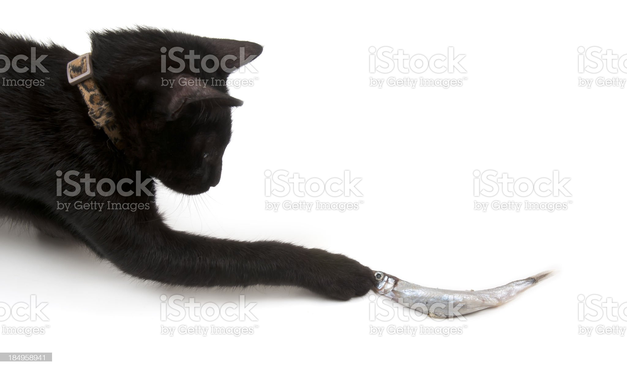Cat and Fish royalty-free stock photo