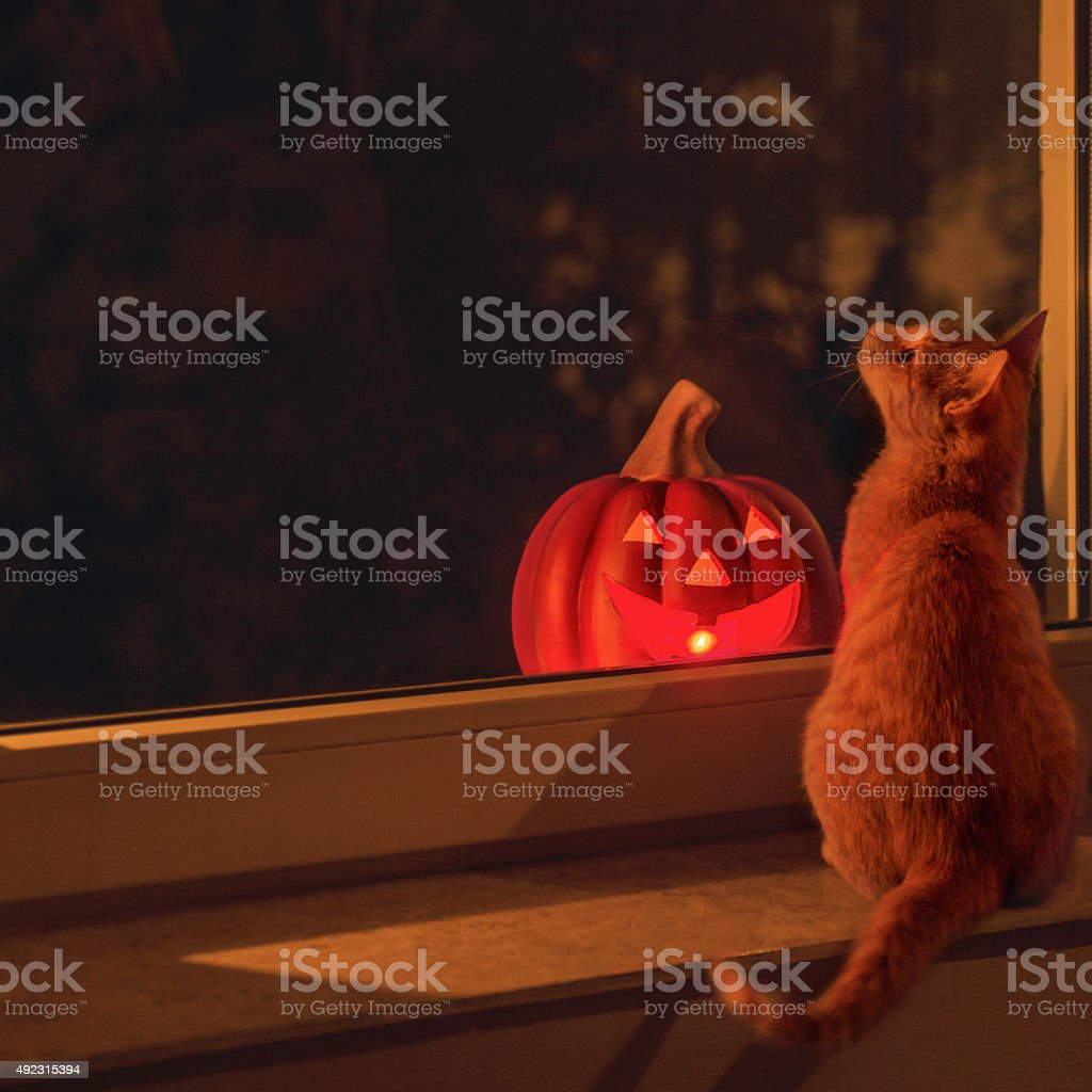 Cat and Halloween pumpkin glowing, standing on the window sill stock photo