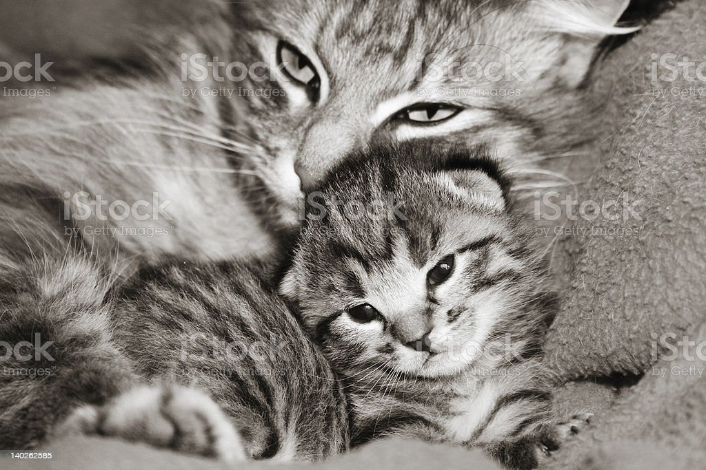 Cat and kitten royalty-free stock photo