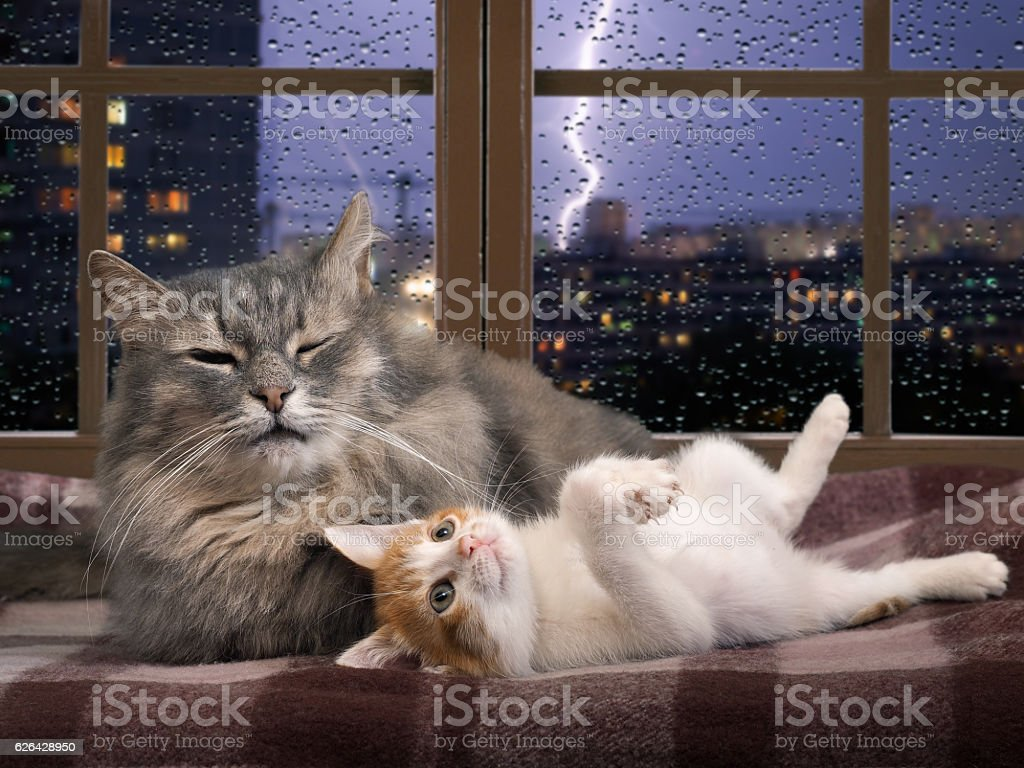 Cat and kitten resting on the window stock photo