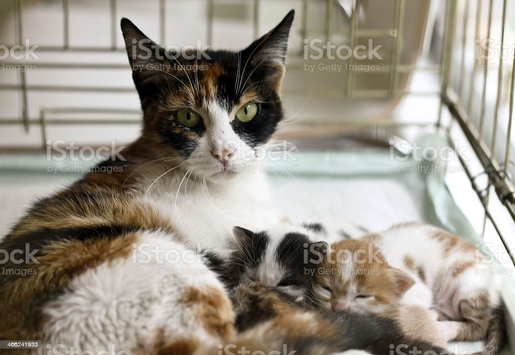Cat and kittens stock photo