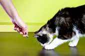 Cat and laser pointer