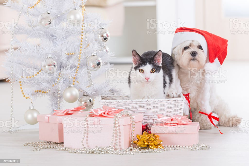 Cat and little dog wearing Santa Claus hat stock photo