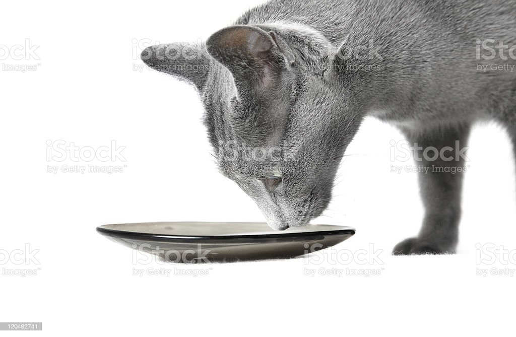 Cat and milk royalty-free stock photo