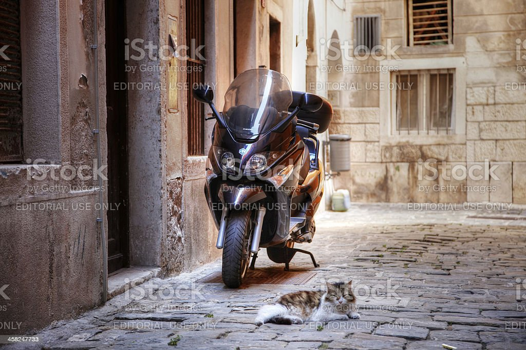 Cat and motorcycle in Slovenian street royalty-free stock photo