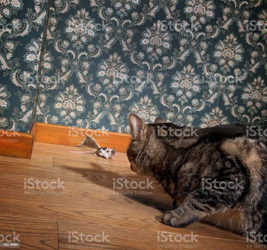 Cat and mouse in a luxury old-fashioned room stock photo