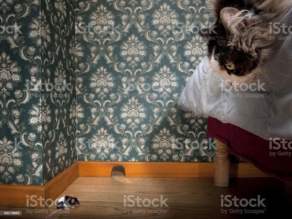 Cat and mouse in a luxury old-fashioned room. stock photo