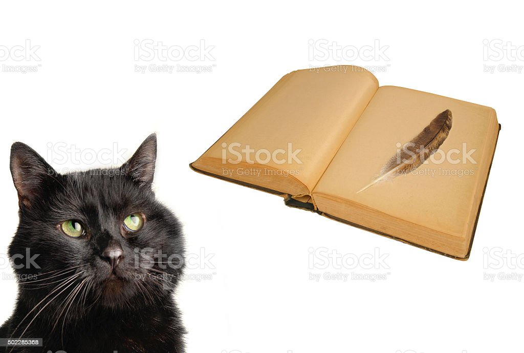 cat and old book stock photo