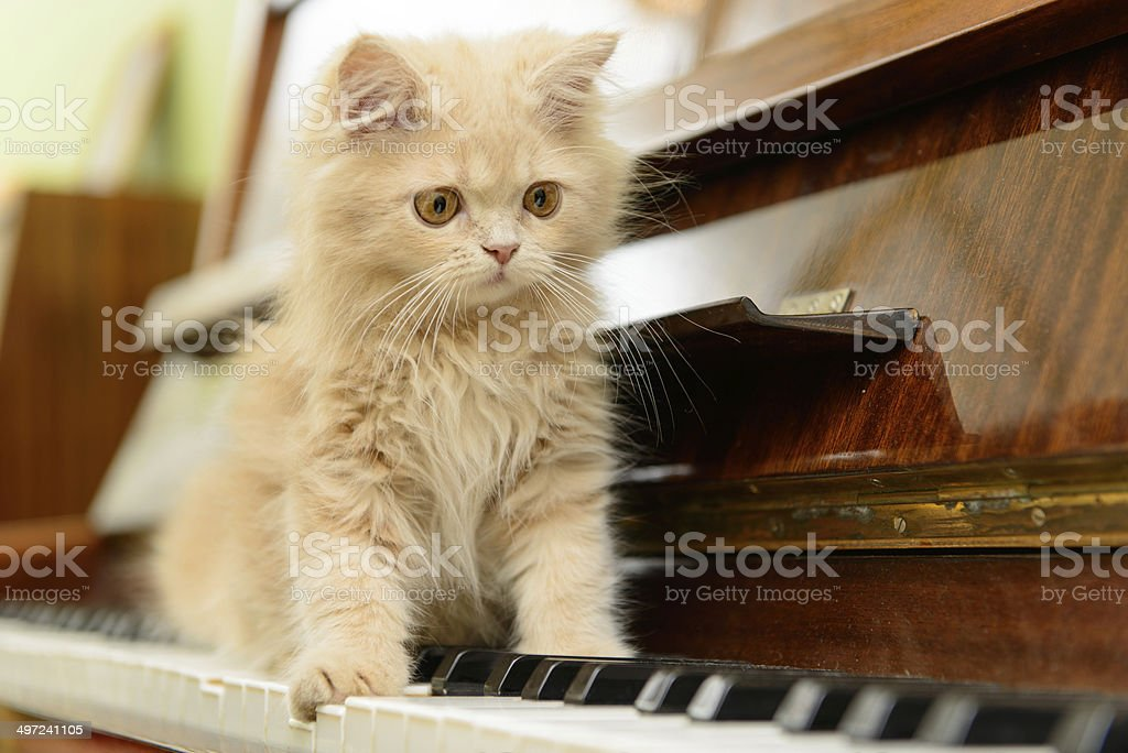cat and piano stock photo