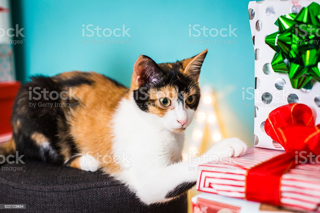Cat and presents stock photo
