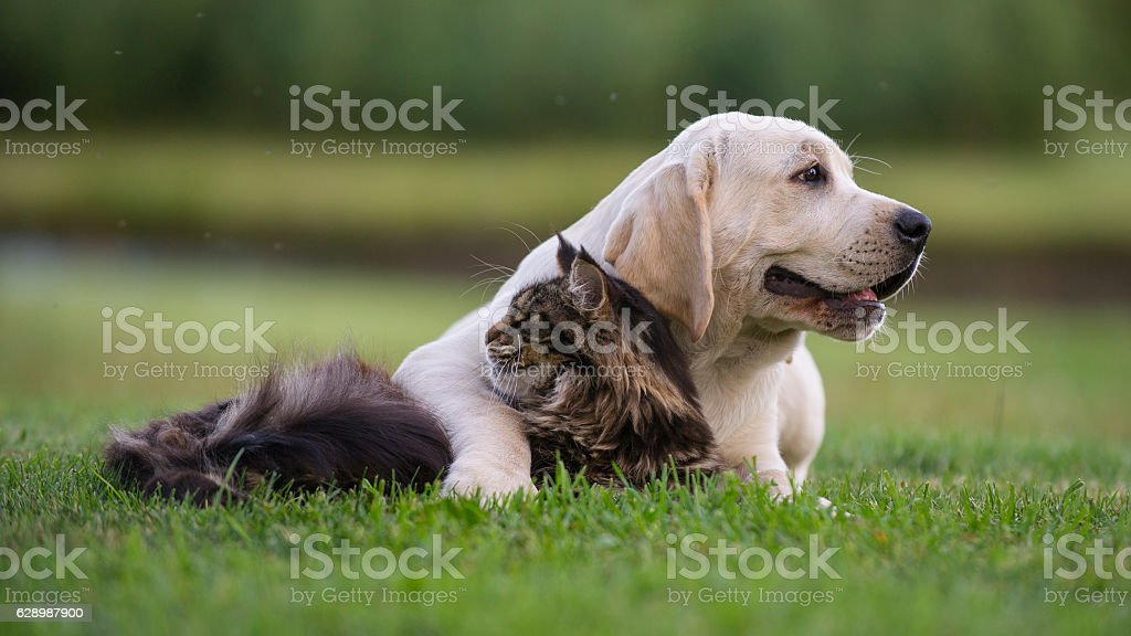 cat and puppy friendship stock photo