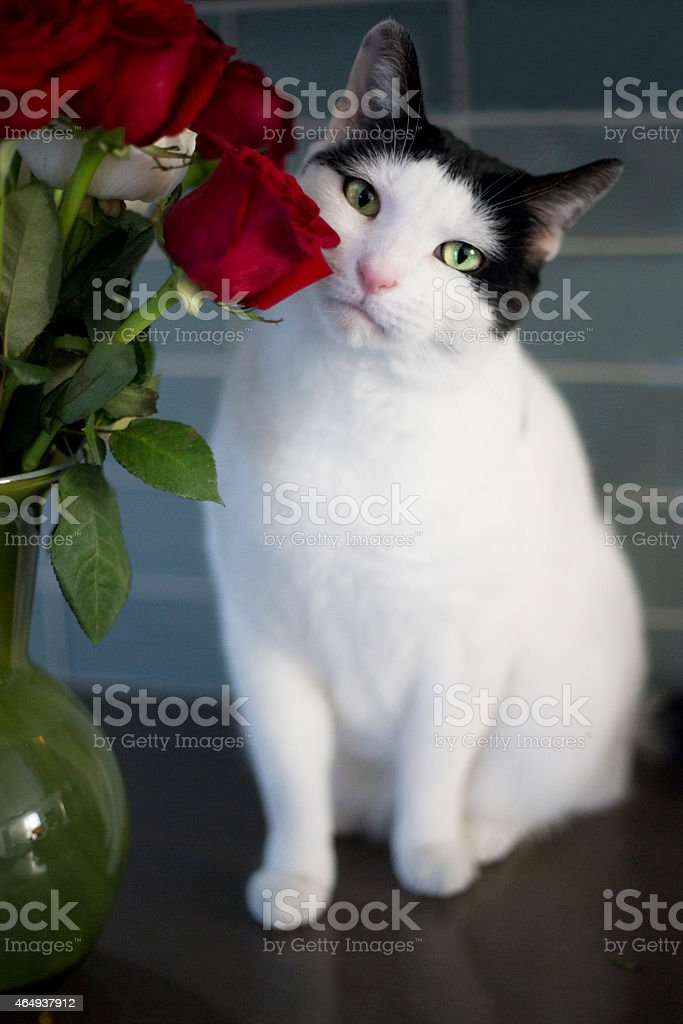Cat and roses stock photo