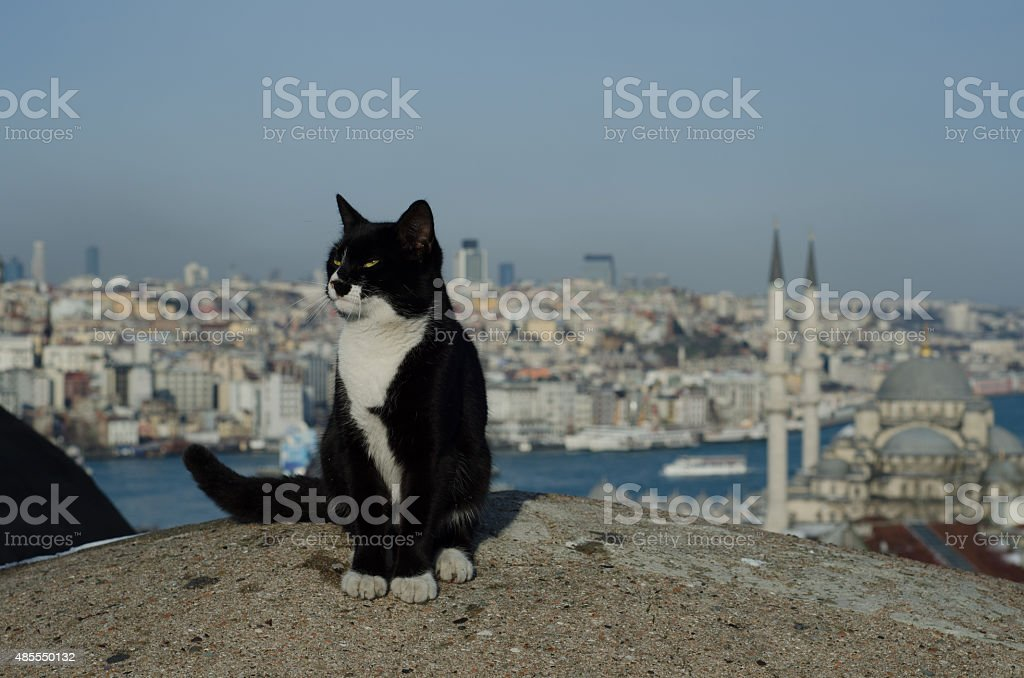 Cat and the Istanbul stock photo