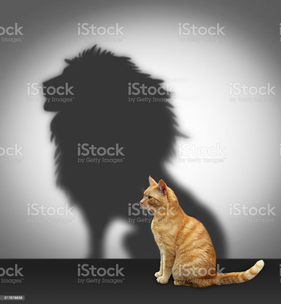 cat and tiger stock photo