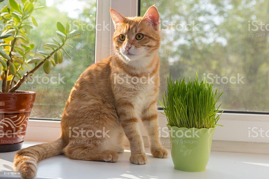 Cat and vase of fresh catnip stock photo