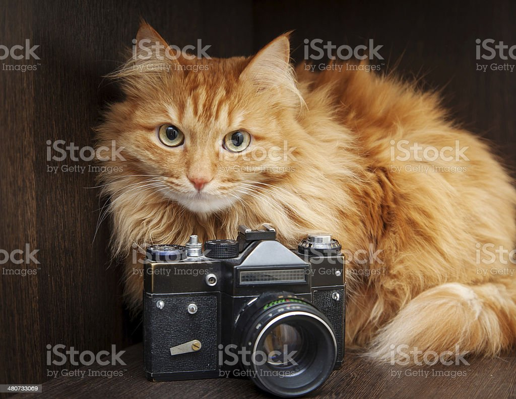cat and vintage photo camera stock photo