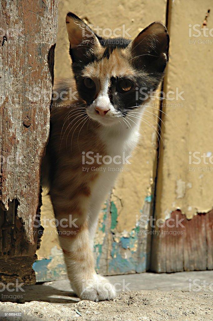 Cat and wooden door royalty-free stock photo