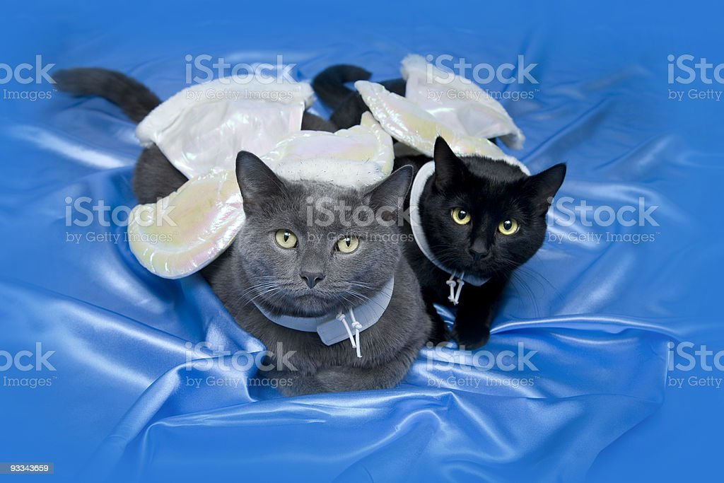 Cat Angels royalty-free stock photo