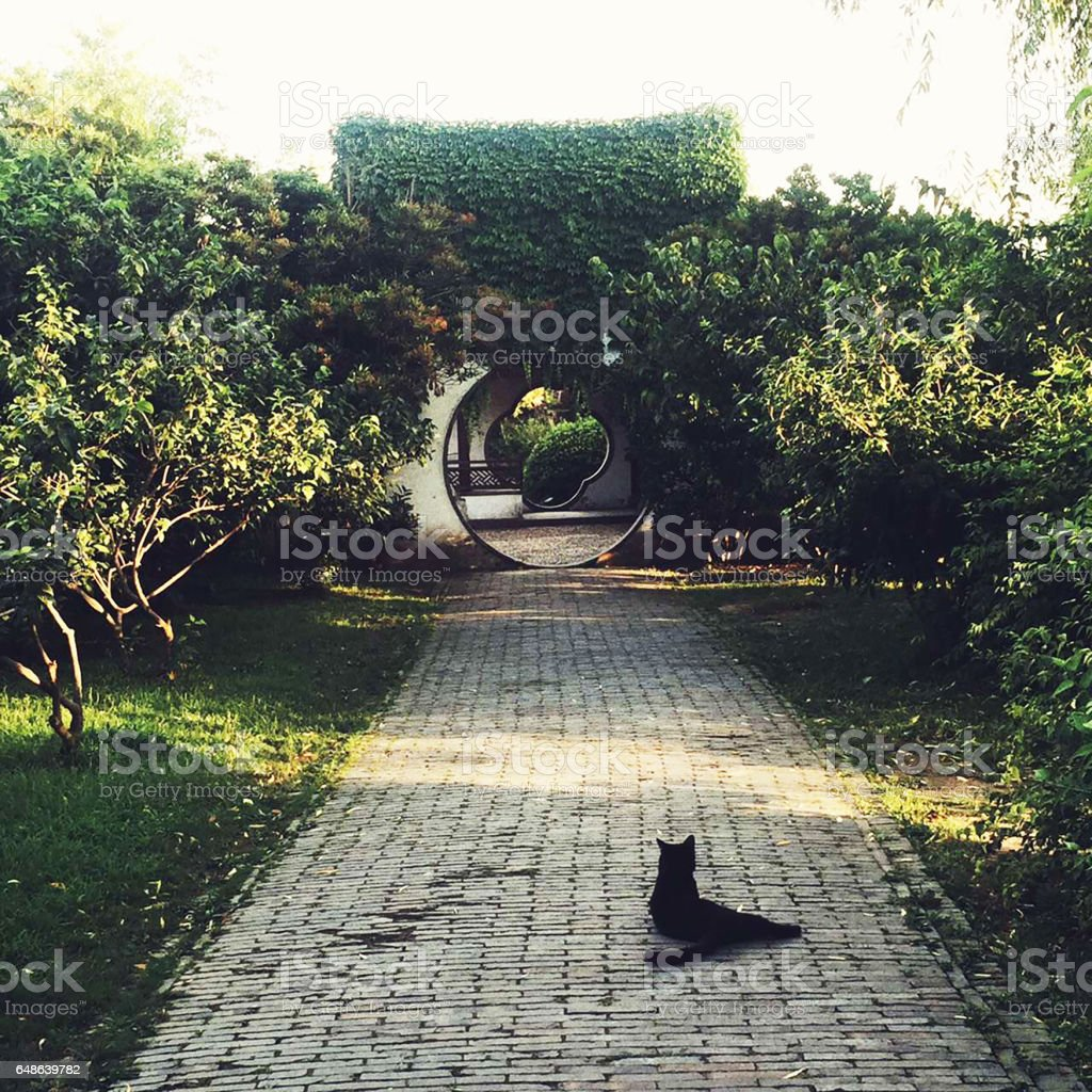 A cat at a garden in Slender West Lake in Yangzhou China in summer stock photo
