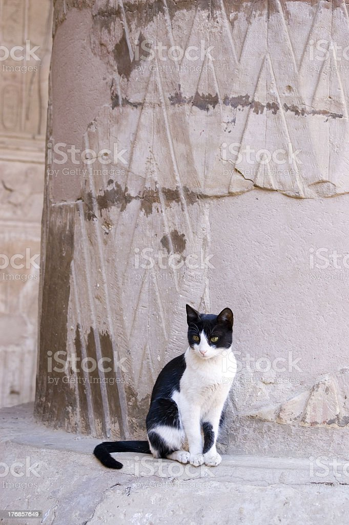 Cat at Ancient Egyptian temple stock photo